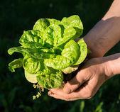 Rolnik posiadający zielonych roślin młodych — Zdjęcie stockowe
