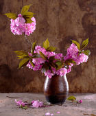 Sakura in a vase — Stock Photo
