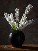 Still life with beautiful white flowers — Stock Photo