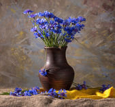 Beautiful blue cornflowers — Stock Photo