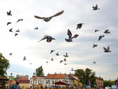 Flight flock of pigeons against the sky — Stockfoto