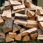 Freshly chopped trees — Stock Photo