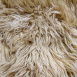 Texture of light sheep pelt — Stock Photo