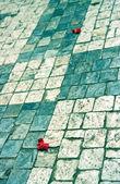 Texture: cobblestones — Stock Photo