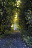 Shady road in autumn forest — Stock Photo