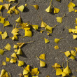 Autumn: yellow gingko leaves on the groung — Stock Photo
