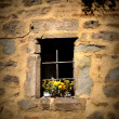 Windows — Stock Photo #31020053