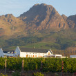 Vineyard at Stellenbosch winery with mountain — Stock Photo
