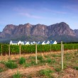 Stock Photo: Stellenbosch, heart of wine growing region in South Afri