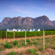 Stellenbosch, the heart of the wine growing region in South Afri - Stock Photo