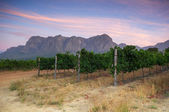 Stellenbosch, the heart of the wine growing region in South Afri — Stock Photo