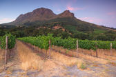 Stellenbosch, the heart of the wine growing region in South Afri — Stock Photo