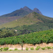 Landscape image of a vineyard, Stellenbosch, South Africa — Stock Photo
