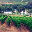 Landscape image of a vineyard, Stellenbosch, South Africa — Stock Photo #24226759