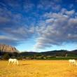Stock Photo: Horses, South Africa