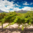 The Stellenbosch wine lands region near Cape Town — Stock Photo