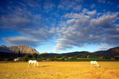 Horses, South Africa — Stock Photo