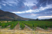 Wine farm, Stellenbosch.South Africa — Stock Photo