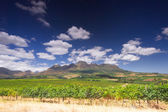 Wine route, stellenbosch, South Africa — Stock Photo