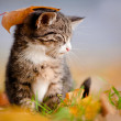Tabby kitten outdoors under an autumn leaf — Stock Photo