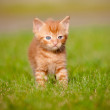 Red tabby kitten outdoors meowing — Stockfoto