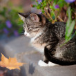 Tabby kitten outdoors portrait — Photo