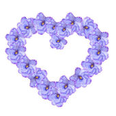 Violet flowers arranged into a heart shape — Стоковое фото
