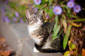 Tabby kitten outdoors portrait — Stock Photo
