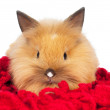 Cute bunny portrait close up — Stock Photo