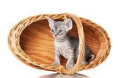 Cute sphynx kitten in woven basket — Stock Photo