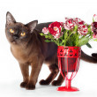 Siamese cat with flowers — Stockfoto