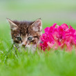 Adorable tabby kitten outdoors — Stock Photo