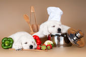 Two adorable puppies asleep while cooking — Stock Photo