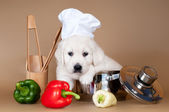 Adorable golden retriever puppy cook — Stock Photo