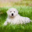 Adorable golden retriever puppy — Stock Photo #27041423