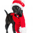 Adorable black dog — Stock Photo