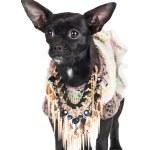 Black little dog — Stock Photo #34393063