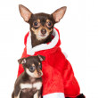 Dog in santcostume with puppy — Stock Photo #36167137