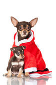Dog in a santa costume with puppy — Stock Photo