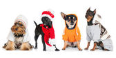 Group of different dogs — Stock Photo