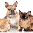 Group of pets — Stock Photo #40401007