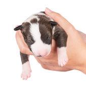 Pasgeboren pup — Stockfoto