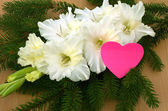 Bright heart and white gladiolus — Stock Photo