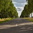Birch trees grow along the road — Stock Photo