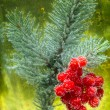 Viburnum berries and spruce branches — Stock Photo #37712887
