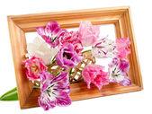 Bouquet of  fringed tulips — Stock Photo