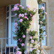 Beautiful pink roses climbing up brick pillar on front verandah — Stock Photo #17671391