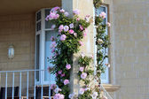 Beautiful pink roses climbing up a brick pillar on front verandah — Stock Photo