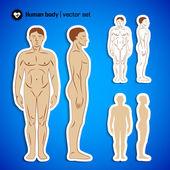 Human body infographics — Stock Vector