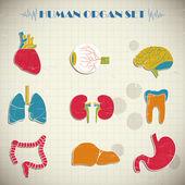 Inwendige organen — Stockvector